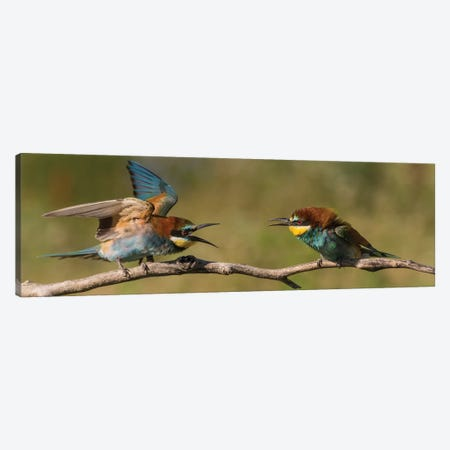 Bee Eater Fight Canvas Print #MTS10} by Martin Steenhaut Canvas Wall Art