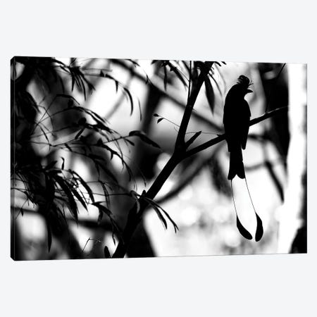 Tail Feathers Canvas Print #MTS110} by Martin Steenhaut Canvas Art