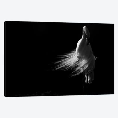 White Lady Canvas Print #MTS112} by Martin Steenhaut Canvas Artwork