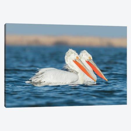 Winter Pelicans Canvas Print #MTS115} by Martin Steenhaut Art Print
