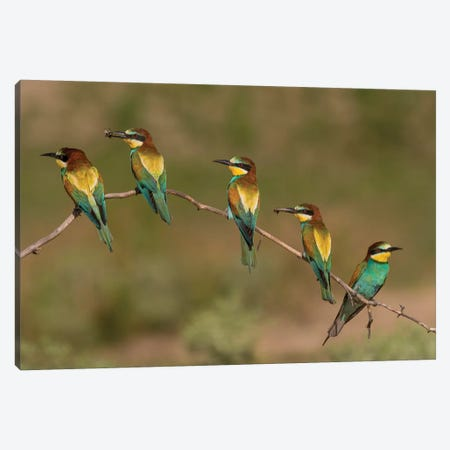 Bee Eaters 3-Piece Canvas #MTS11} by Martin Steenhaut Canvas Wall Art
