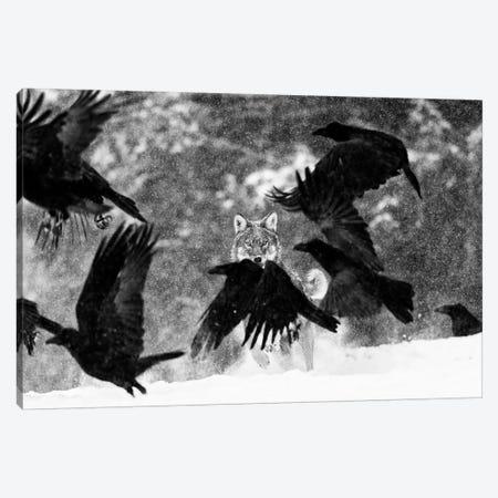 Wolf Attack Canvas Print #MTS120} by Martin Steenhaut Art Print