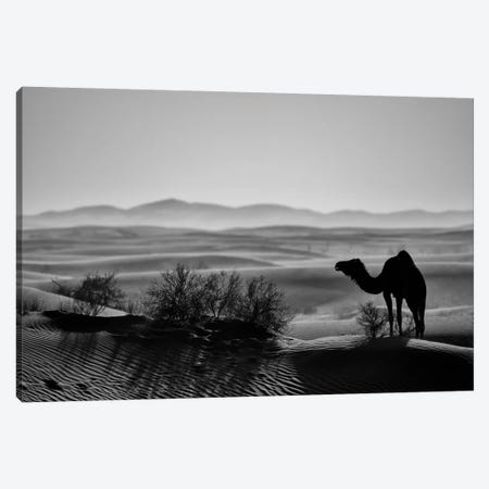 Dark Camel Canvas Print #MTS121} by Martin Steenhaut Canvas Art Print