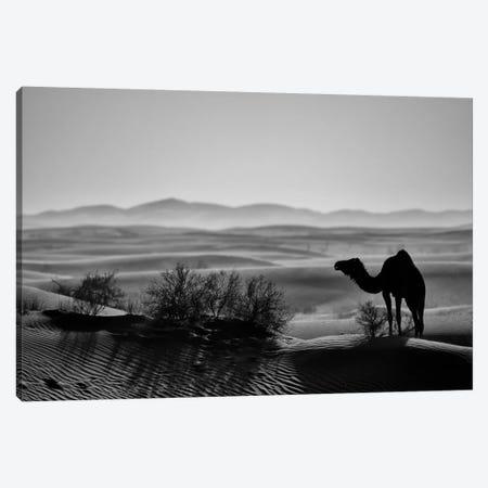 Dark Camel Canvas Print #MTS121} by Martin Steenhaut Canvas Art Print