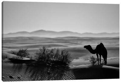 Dark Camel Canvas Art Print