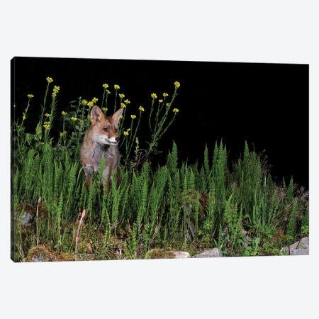 Night Flower Fox I Canvas Print #MTS144} by Martin Steenhaut Canvas Wall Art