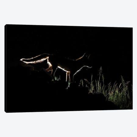 Silhouette Night Fox Canvas Print #MTS145} by Martin Steenhaut Canvas Art