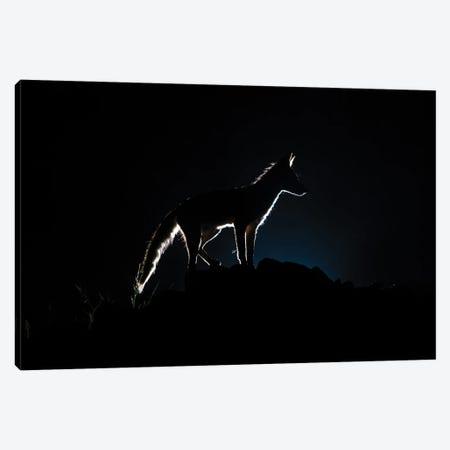 Blue Light Fox Silhouette Canvas Print #MTS146} by Martin Steenhaut Canvas Art