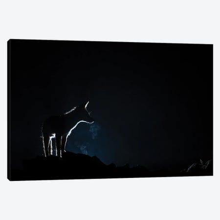 Fox Night Breath Canvas Print #MTS147} by Martin Steenhaut Canvas Art