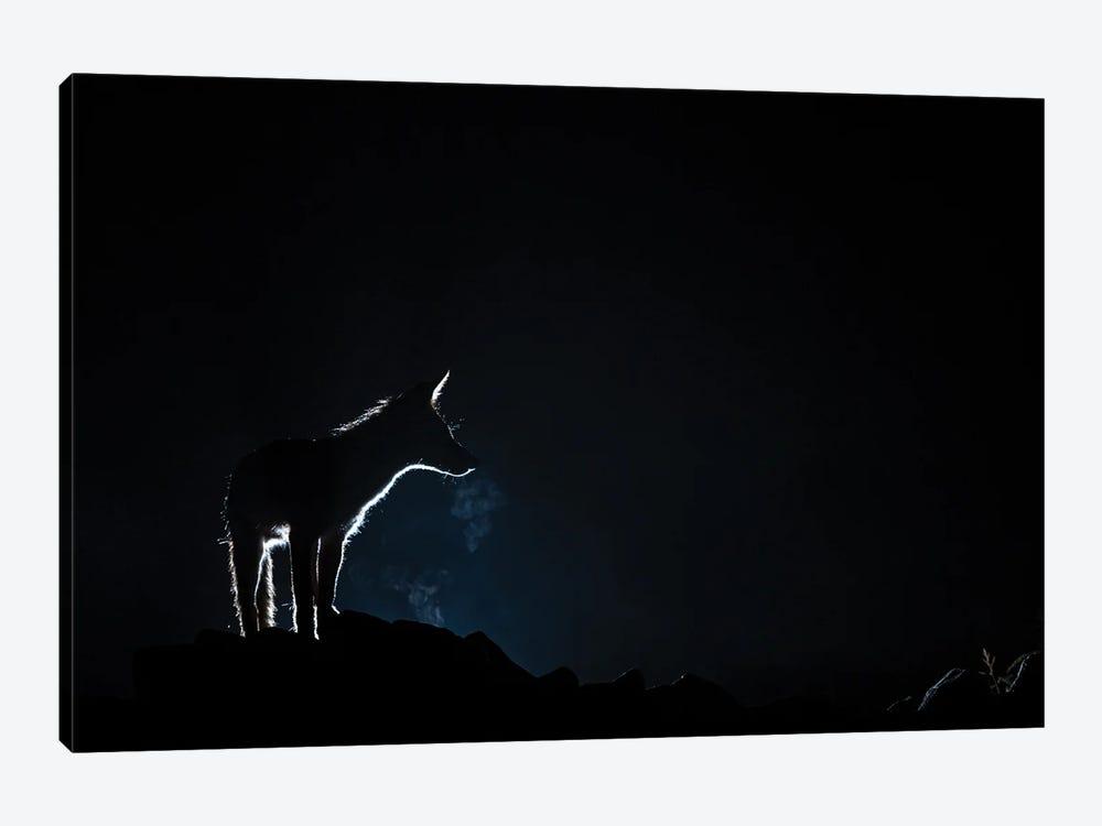Fox Night Breath by Martin Steenhaut 1-piece Canvas Wall Art