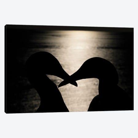 Gannet Night Kiss Canvas Print #MTS154} by Martin Steenhaut Canvas Print