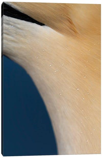 Gannet Drops Canvas Art Print