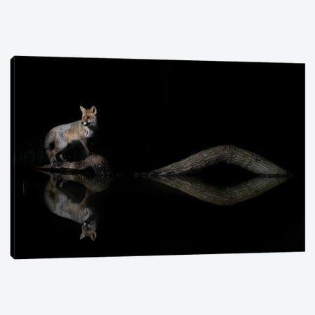 Night Fox Reflections Canvas Print #MTS161} by Martin Steenhaut Art Print