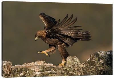 Golden Eagle Dance Canvas Art Print