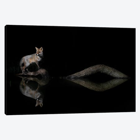 Night Fox Water Reflections Canvas Print #MTS166} by Martin Steenhaut Canvas Art