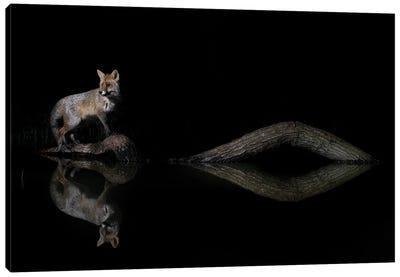 Night Fox Water Reflections Canvas Art Print