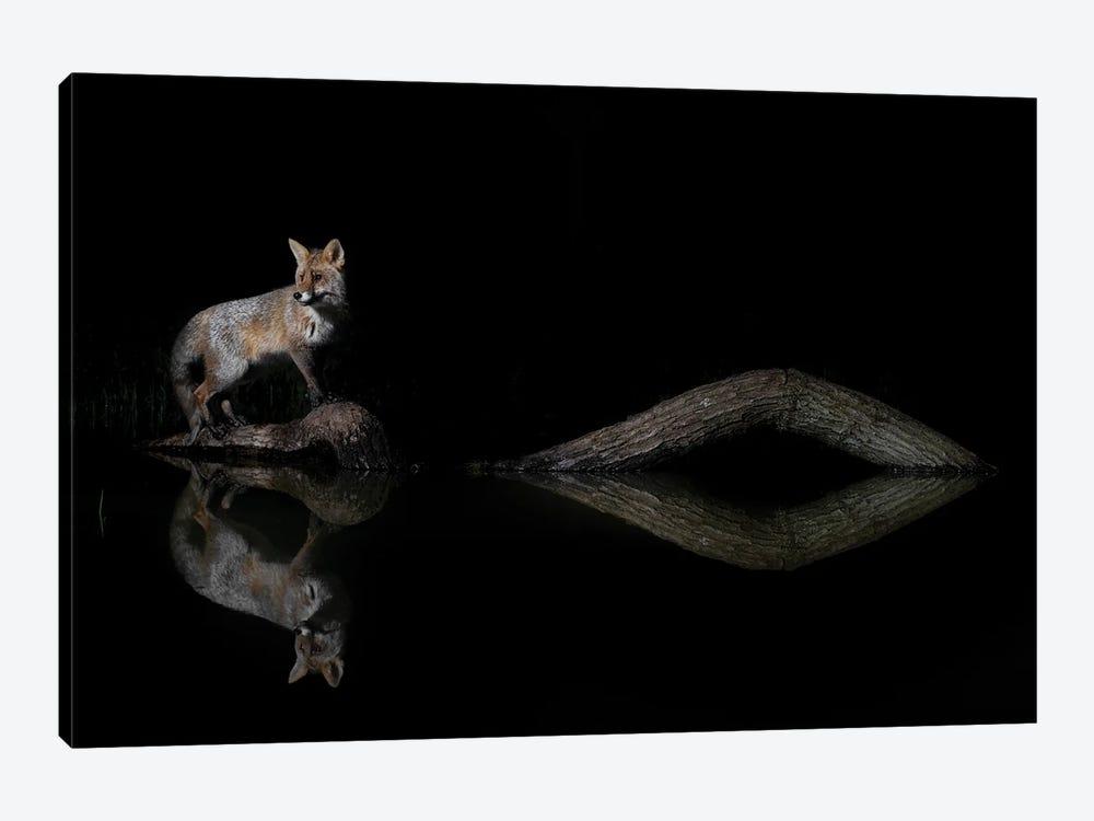 Night Fox Water Reflections by Martin Steenhaut 1-piece Canvas Art Print