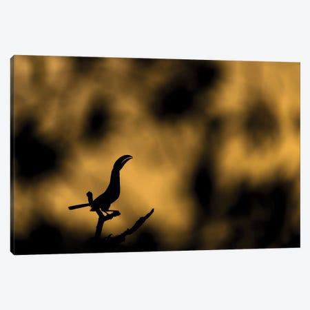 Golden Toucan Morning Canvas Print #MTS168} by Martin Steenhaut Canvas Art Print