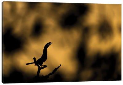 Golden Toucan Morning Canvas Art Print