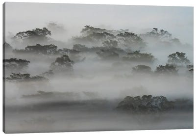 Rainforest Waking Up Canvas Art Print