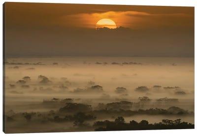 Sunrise In The Jungle Canvas Art Print