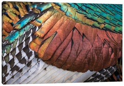 Amazing Feathers Canvas Art Print