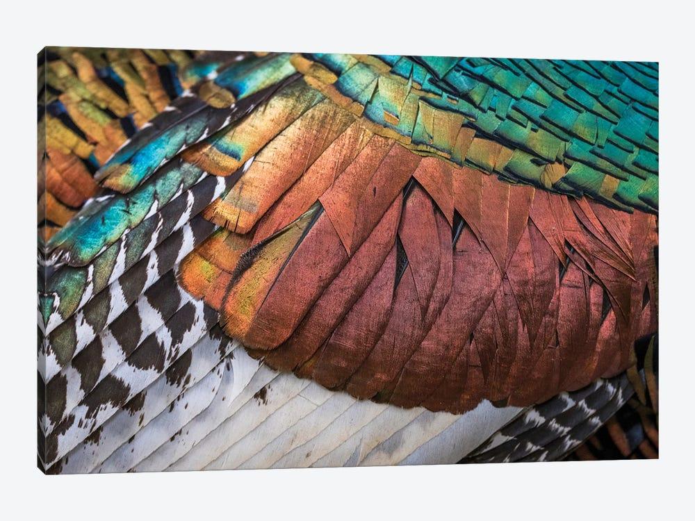 Amazing Feathers by Martin Steenhaut 1-piece Canvas Artwork