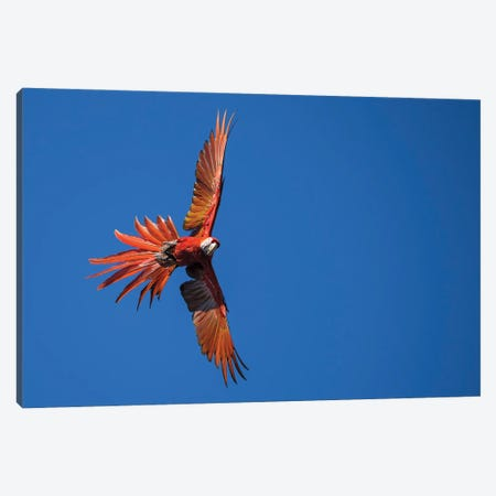 Red Explosion In A Blue Sky Canvas Print #MTS173} by Martin Steenhaut Canvas Art