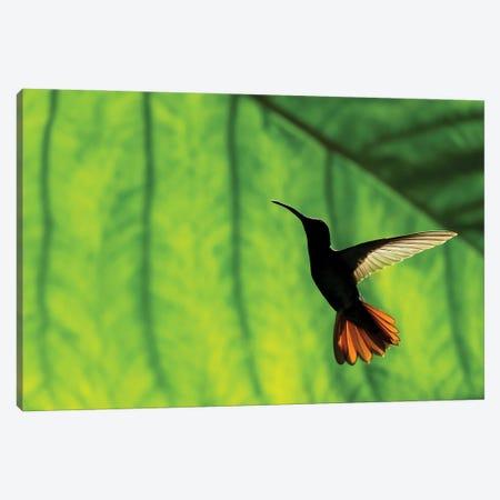 Hummingbird Silhouette I Canvas Print #MTS174} by Martin Steenhaut Canvas Print