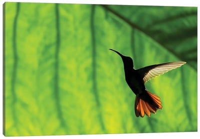 Hummingbird Silhouette I Canvas Art Print