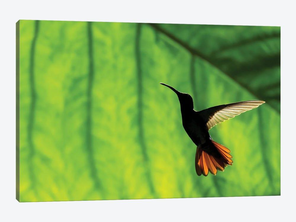 Hummingbird Silhouette I by Martin Steenhaut 1-piece Canvas Art