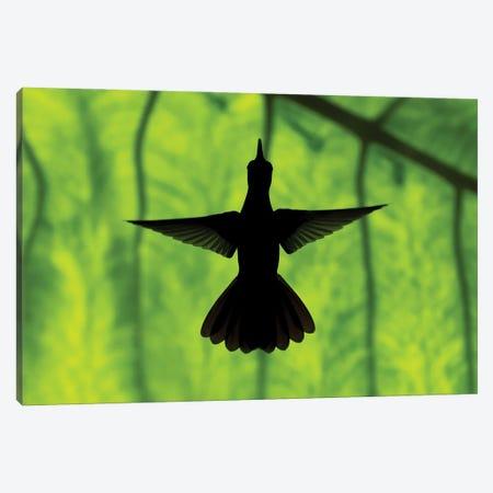 Hummingbird Silhouette II Canvas Print #MTS175} by Martin Steenhaut Art Print