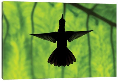 Hummingbird Silhouette II Canvas Art Print