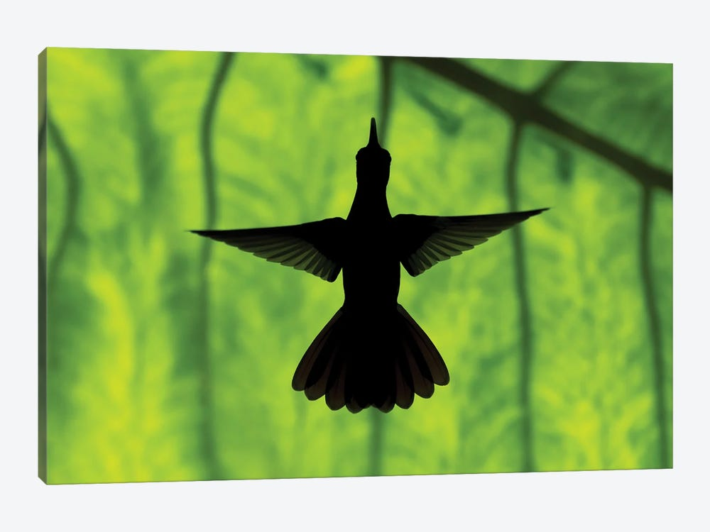 Hummingbird Silhouette II by Martin Steenhaut 1-piece Canvas Print