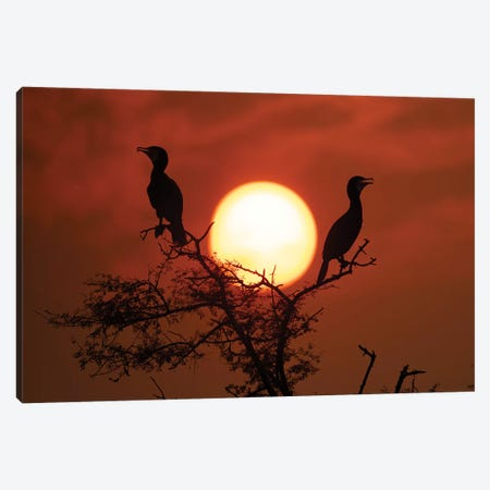 Cormorant Sunset Canvas Print #MTS22} by Martin Steenhaut Canvas Print
