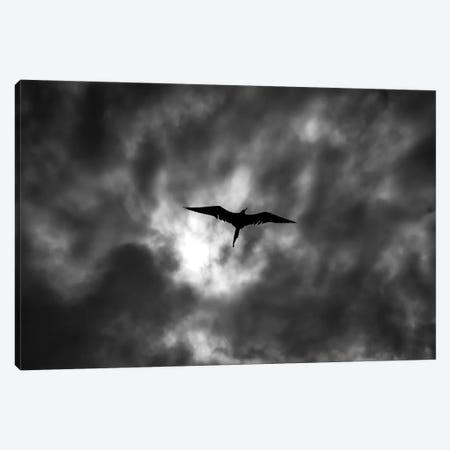Dark Clouds Canvas Print #MTS25} by Martin Steenhaut Canvas Wall Art