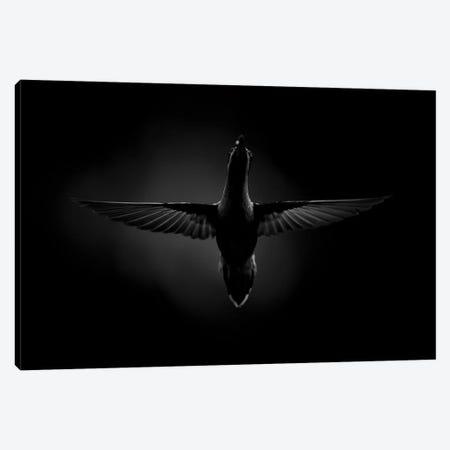 Dark Flight Canvas Print #MTS26} by Martin Steenhaut Canvas Artwork