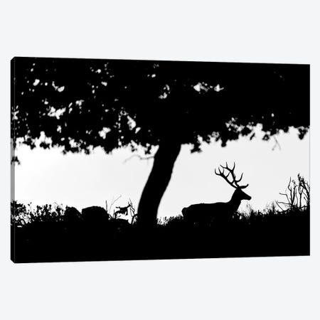Deer Silhouette Canvas Print #MTS27} by Martin Steenhaut Canvas Artwork