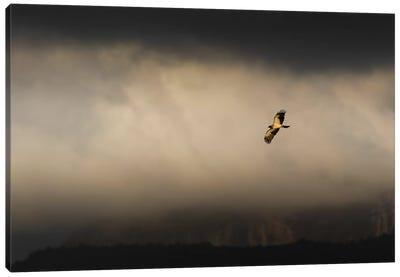 After Storm Eagle Flight Canvas Art Print