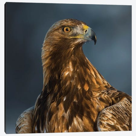 Eagle Portrait Canvas Print #MTS31} by Martin Steenhaut Canvas Wall Art