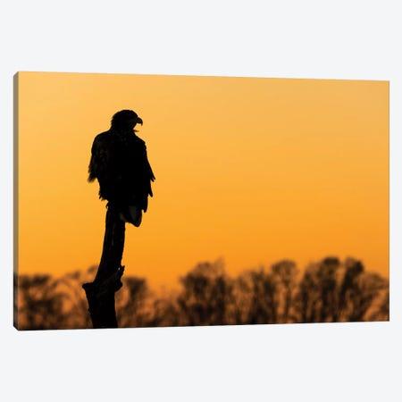 Eagle Sunset Canvas Print #MTS32} by Martin Steenhaut Canvas Artwork
