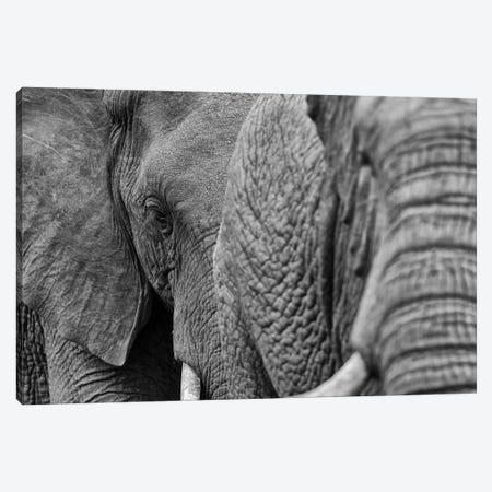 Elephants Canvas Print #MTS34} by Martin Steenhaut Canvas Art Print