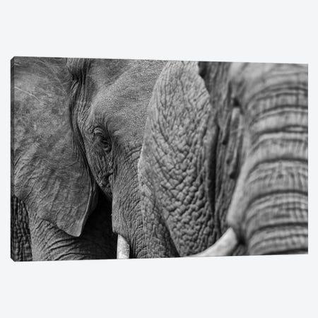 Elephants 3-Piece Canvas #MTS34} by Martin Steenhaut Canvas Art Print