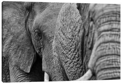 Elephants Canvas Art Print