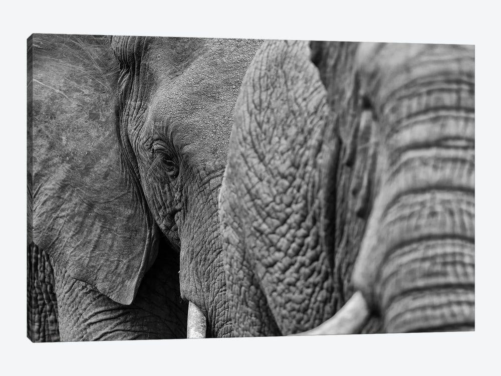 Elephants by Martin Steenhaut 1-piece Art Print