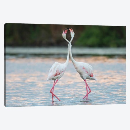 Flamingo Duet Canvas Print #MTS36} by Martin Steenhaut Canvas Print