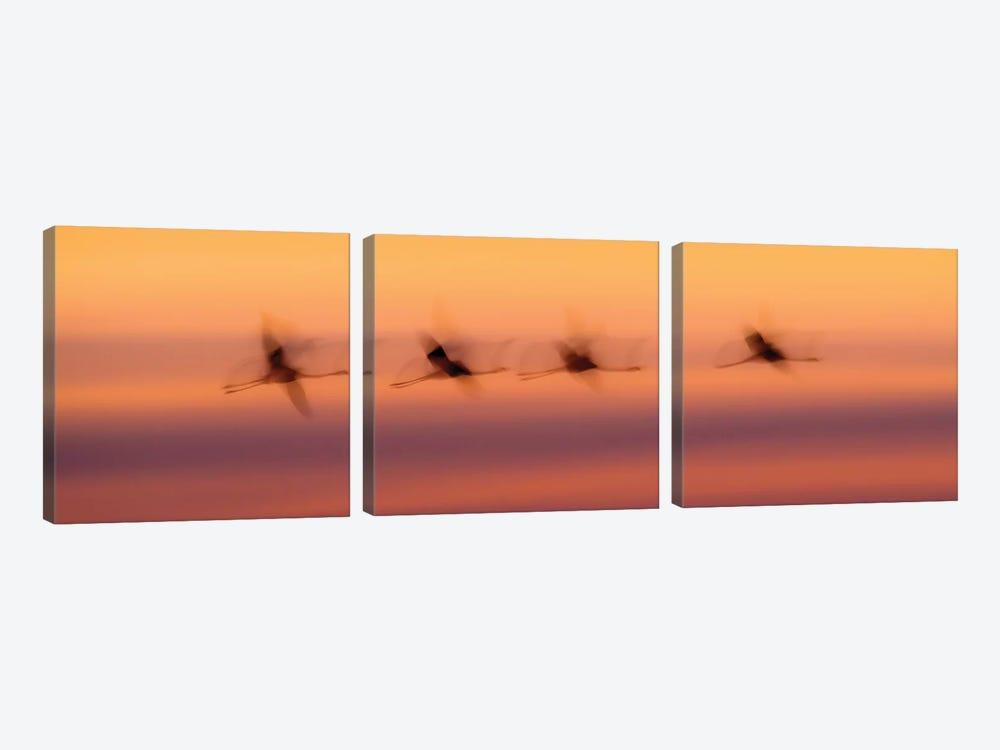 Flamingo Flight by Martin Steenhaut 3-piece Canvas Art