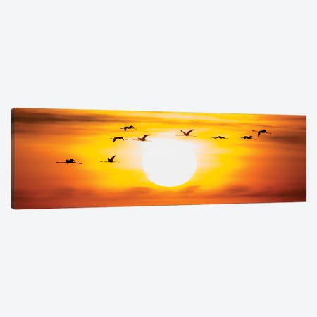 Flamingo Sunset Canvas Print #MTS40} by Martin Steenhaut Canvas Print