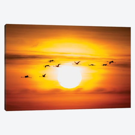 Flamingo Sunset II Canvas Print #MTS41} by Martin Steenhaut Art Print