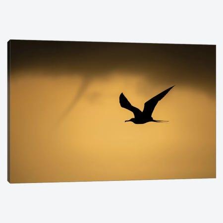 Frigatbird Sunset Canvas Print #MTS42} by Martin Steenhaut Art Print
